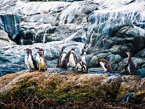 Isla Pingüinos y Costa Cachagua