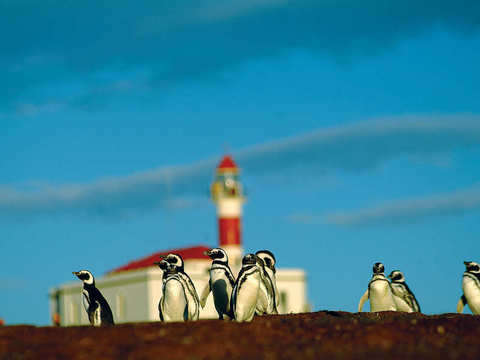 Penguin Tour in Magdalena Island