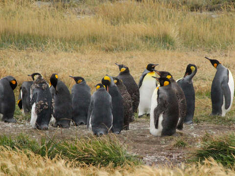 Full Day Tierra del Fuego (King Pinguino Park)