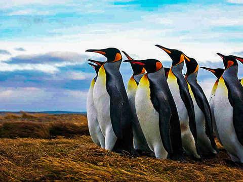Pinguino Rey y Tierra del Fuego Tour